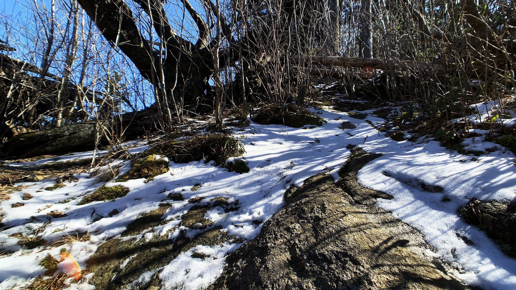 Snow and brush trailside at the Devil's Courthouse