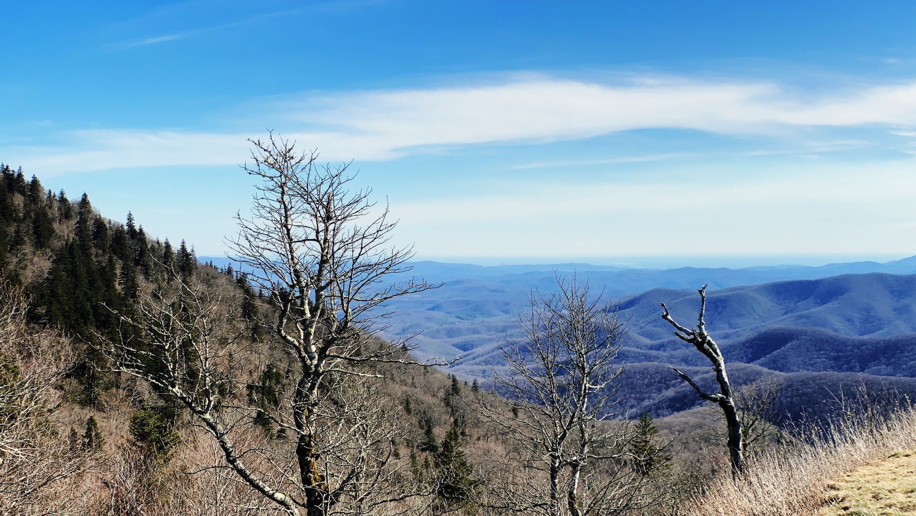 """Trees put the """"blue"""" in Blue Ridge, from the isoprene released into the atmosphere, thereby contributing to the characteristic haze on the mountains and their distinctive color."""